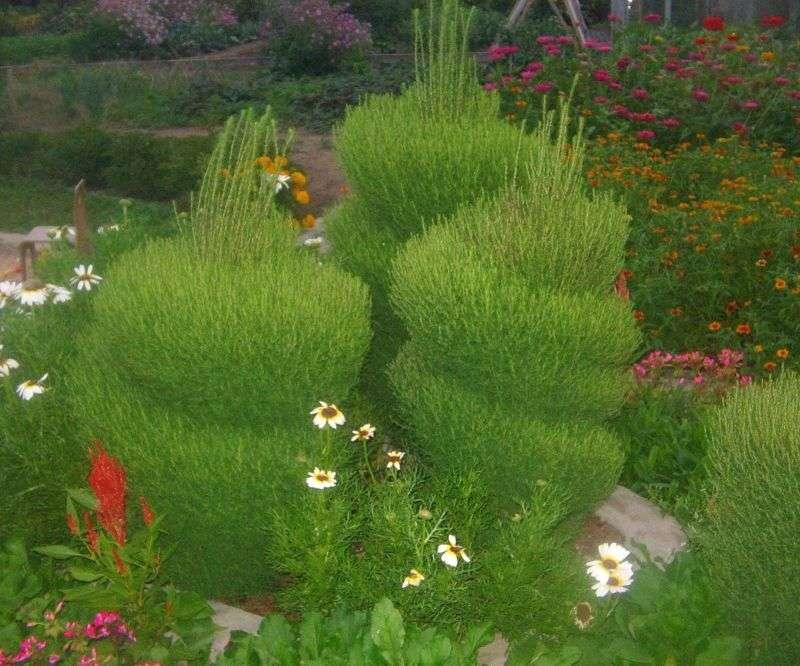 Расстояние между лунками должно быть не менее 35 см, чтобы соседние растения впоследствии не мешали друг другу.