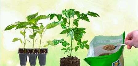 Сигналом к необходимости подкормить рассаду могут стать такие признаки: изменение цвета, скручивание или засыхание листьев, бледность, тонкий длинный стебель и болезненный вид растения.