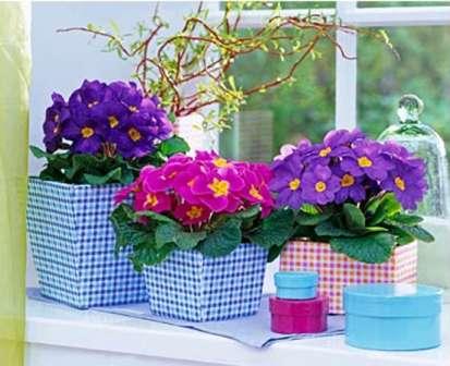 С наступлением февраля или немного раньше емкости с цветами перемещают в домашнее помещение с температурой не более 18 °С.