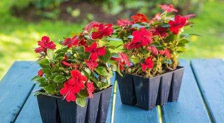 О сроках посадки на рассаду цветов, не упомянутых выше, вы можете узнать на упаковке семян. Важно учитывать, что обычно рекомендации даются в обобщенном виде.
