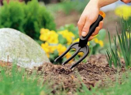 Перекапывать грядки после сбора урожая нужно ежегодно. Если посадить сидераты — можно не перекапывать.