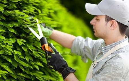 Садовые растения также требуют заботы.