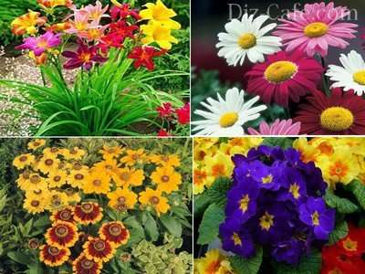 Перейдем к рассмотрению сроков посадки различных цветов на рассаду, рекомендованных профессиональными цветоводами.
