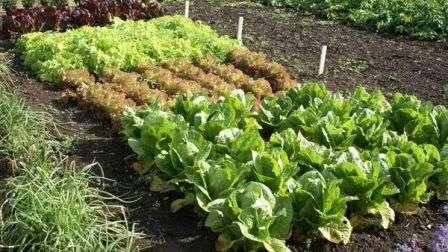 Культивированием овощей люди начали заниматься с незапамятных времен. С тех пор испробовано немало способов организации пространства огорода.