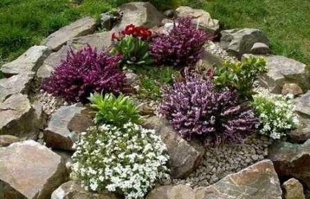 Советы по подбору растений для альпинария и рокария — это объемная тема, которую стоит исследовать отдельно.