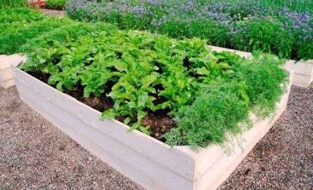 Высокие грядки — наиболее эффективная разновидность, позволяющая получать урожай раньше и в большем количестве, защищая растения от сорняков и вредителей.