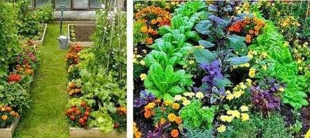 Эти растения также можно посадить вокруг других культур.