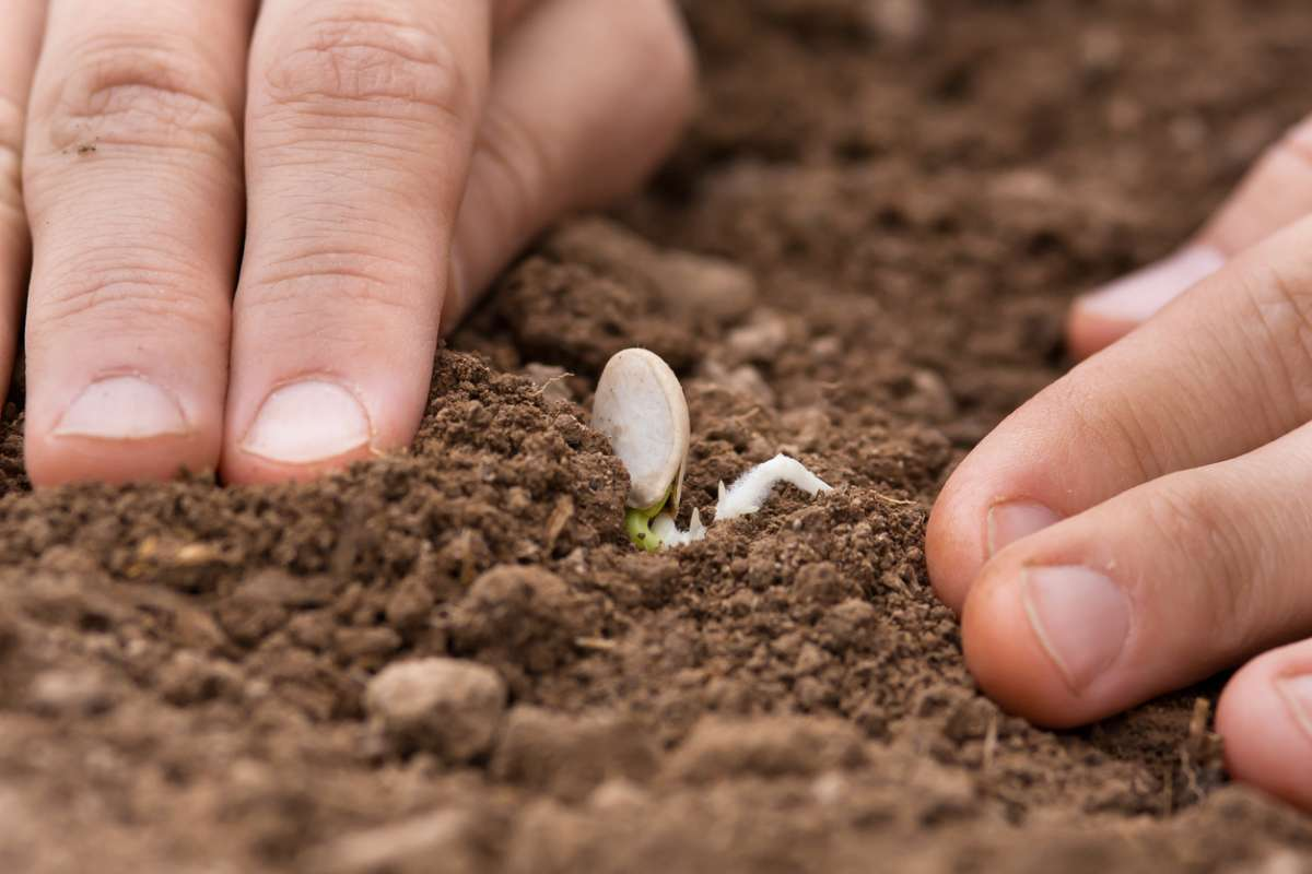 вырастить тыкву сибири