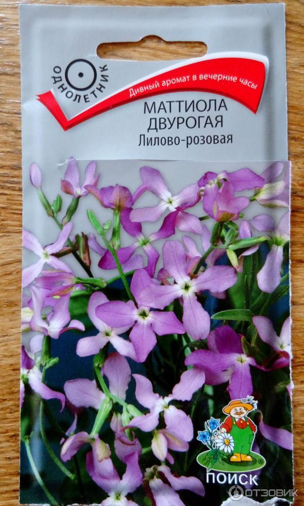 маттиола многолетняя посадка и уход фото