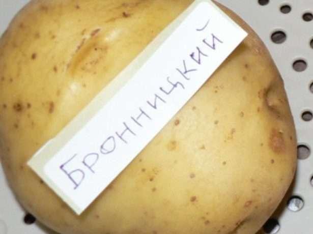 сорта картофеля устойчивые к фитофторе и парше
