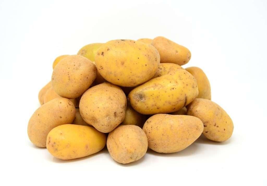 картофель удача характеристика сорта отзывы вкусовые качества