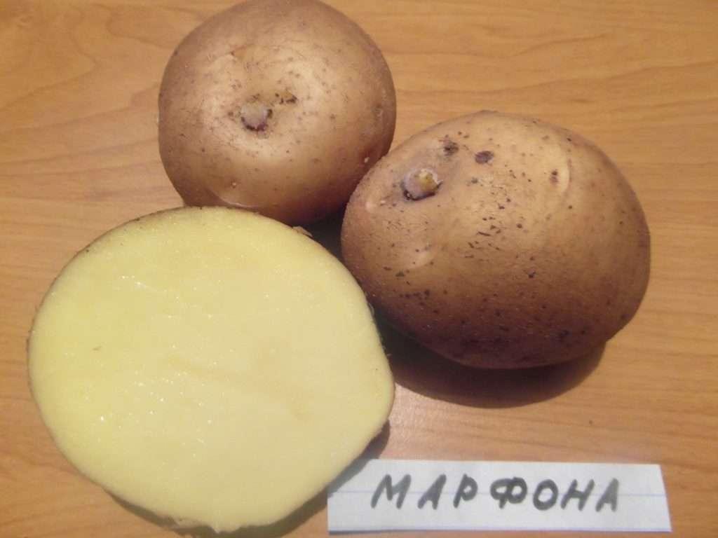 сорта рассыпчатого картофеля с желтой мякотью