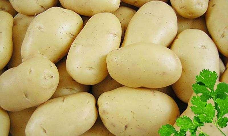 картофель с желтой мякотью описание сорта фото