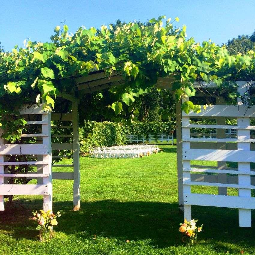 схема шпалер для винограда